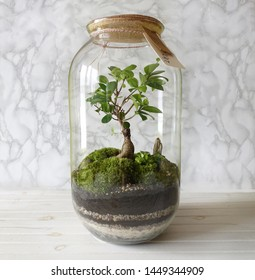 Small decoration plants in a glass bottle/garden terrarium bottle/ forest in a jar. Terrarium jar with piece of forest with self ecosystem. Save the earth concept. Bonsai