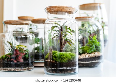 Small decoration plants in a glass bottle/garden terrarium bottle/ forest in a jar. Terrarium jar with piece of forest with self ecosystem in modern interior. Shallow depth of field, blurred