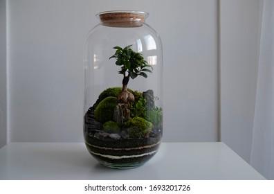Small decoration plants in a glass bottle/garden terrarium bottle/ forest in a jar. Terrarium jar with piece of forest with self ecosystem in modern interior. Terrarium Miniature Botanical Grow