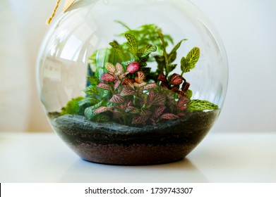 Small decoration plants in a glass bottle/garden terrarium bottle/ forest in a jar. Terrarium jar with piece of forest with self ecosystem. Save the earth concept. Bonsai, set of terrariums/ jars