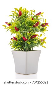 Small decorative chilli pepper plant in a ceramic vase isolated on white background.