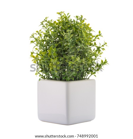 Small decorative plant in a ceramic vase isolated on white background.