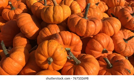 Small decorative pumpkins pile with stems