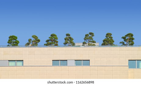 Small decorative trees on rooftop terrace of a modern building