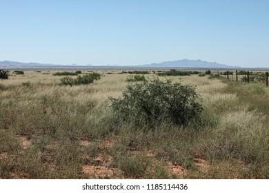 Small desert mesquite tree in summertime tumbleweeds and grasses landscape