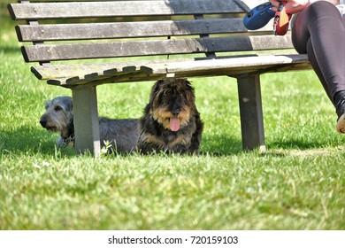 Amazing Imagenes Fotos De Stock Y Vectores Sobre Dog Under Bench Frankydiablos Diy Chair Ideas Frankydiabloscom