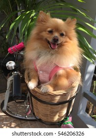 Small dog in the basket