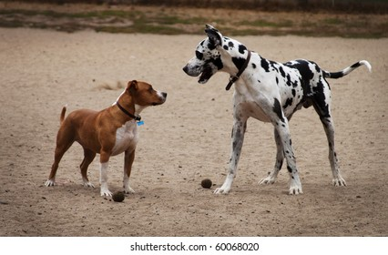 a small dog and a big dog face off