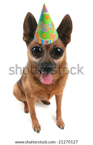 A Small Dog With Birthday Hat On