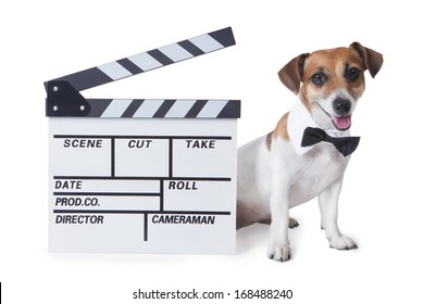 Small dog with a black bow tie and collared shirt smiles sits beside to a movie Clapperboard. White background. studio shot