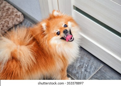 Small dog breeds Dog with open mouth looking at camera
