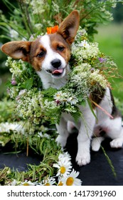 small dog brown with white with flower crown, Sitting on a table, surrounded by a bouquet of flowers and a green mug, at ligo festive in latvia
