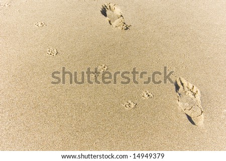 A small dog and its human companion have left their prints on the beach.
