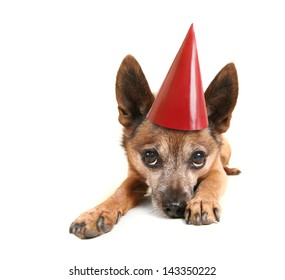 a small dog laying down and pouting with a birthday hat on