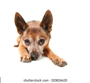 a small dog laying down and pouting isolated on a white background
