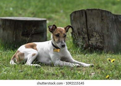 small dog lying in the grass.