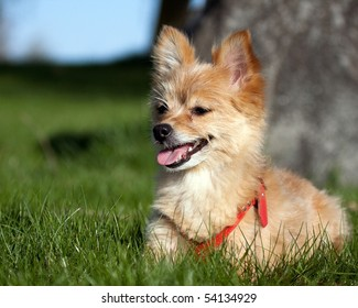 A small dog lying in the grass.