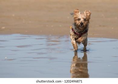 Small dog on the beach