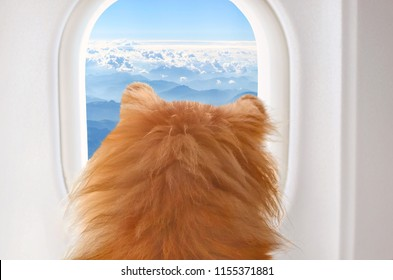 small dog on board of airplain looking out the window at the clouds while traveling, selective focus