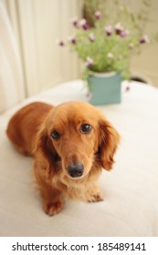 Small dog on the sofa