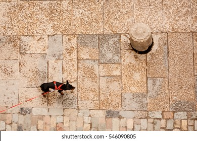 Small dog on the street seen from top