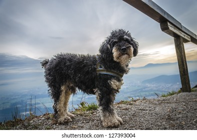 Small dog on top of hill with panoramic background.