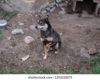 small dog with one healthy eye, tied on a chain, a sad portrait