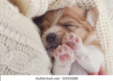 Small Dog Puppy Sleeping Sweet on Cozy Knitted Sweater. Human Holding Pet on Hands. Animals Care.