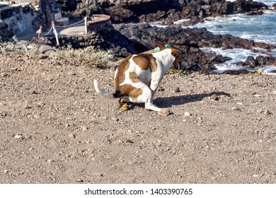 a small dog puts a thick pile of shit in the middle of the beach, this should be forbidden and  avoided, calling for a better understanding of compliance with rules