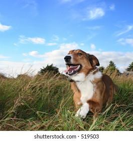 Small dog running through field