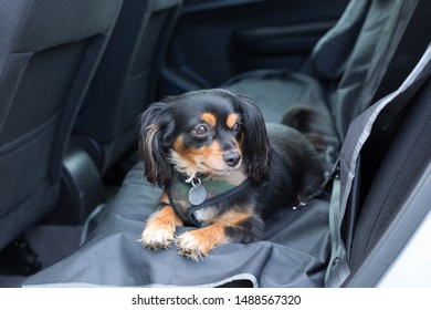 small dog secured in back seat of car