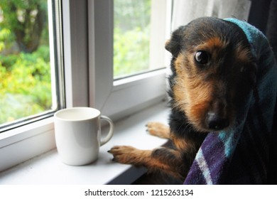 small dog sits at the autumn window with a cup and looks back.