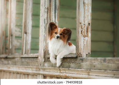 A small dog is sitting by  window. vintage pets