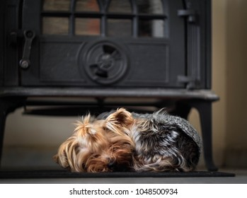 A small dog sleeps near the stove in comfort and warmth