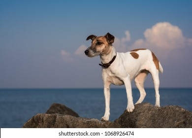 a small dog stands on stones near the sea shore