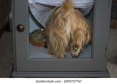 Small dog steps in through a doggie door to eat its dinner