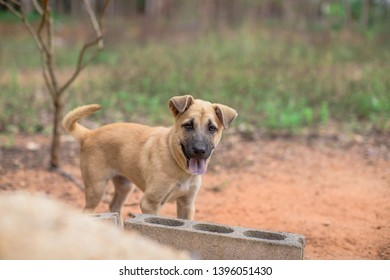 Dog Gallery Stock Photos Images Photography Shutterstock