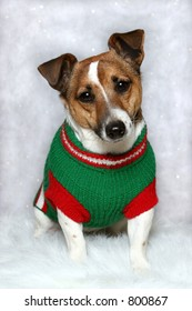 small dog wearing green and red sweater on white winter background
