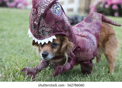 Small Dog Wears Dinosaur Costume