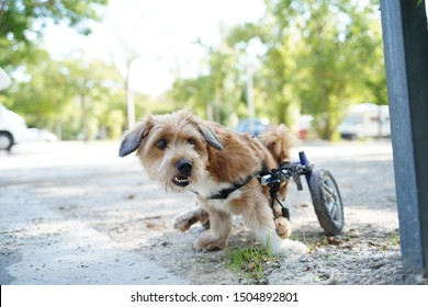 small dog with a wheelchair