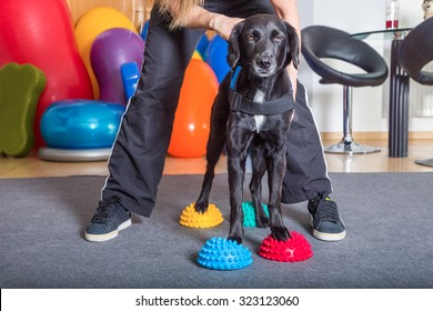 small dog with woman in therapy