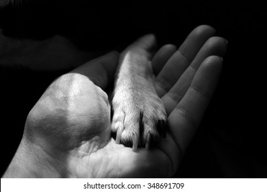 Small dog's paw in human hand. Black and white image symbolizing dog and human friendship and relations. Subtle dog's paw hold by bigger human hand to protect.