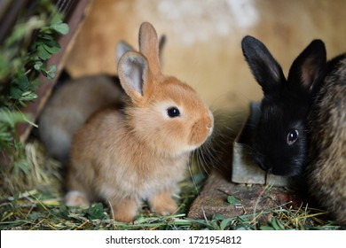 Small domestic rabbits eating grass in the nest