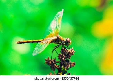 Small dragonfly. Beautiful insect sitting on a swamp flower on a blurred nature background. Highly detailed creature.