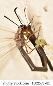 A small dragonfly lays eggs