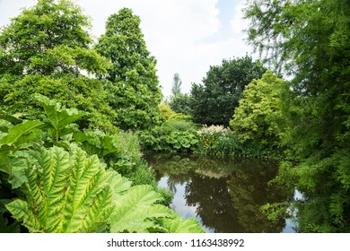 Small duck pond surrounded by lavish greenery in Hyde Hall garden Essex, UK