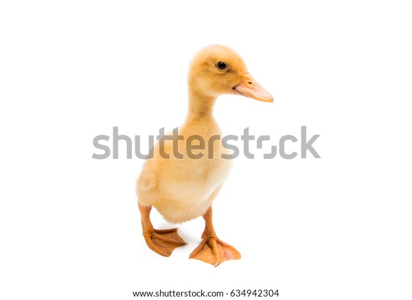 Small ducklings on a white background