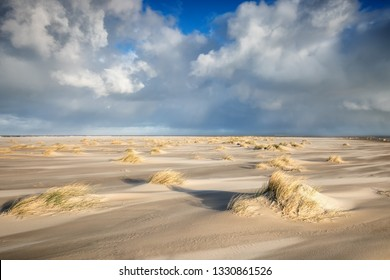 small dunes and grass on windy North sea beach on sunny day