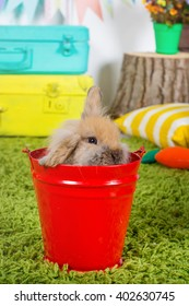 Small easter bunny sitting in a red bucket in the Color Studio on the grass on the background of the check boxes and suitcases