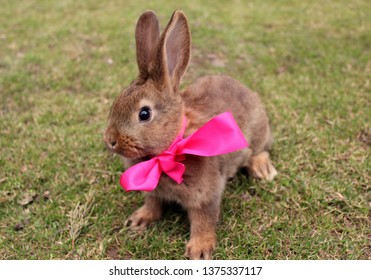 Small easter rabit